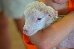 Wisconsin Sheep & Wool Festival: 15 years and growing
