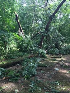 Storm damage causes trail closures in southern Wisconsin